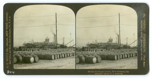 804 On the Sugar Levee, New Orleans, La., 1901