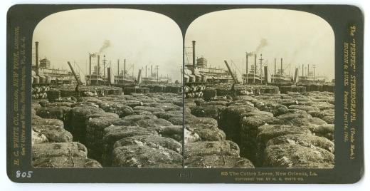 805 The Cotton Levee, New Orleans, LA., 1901