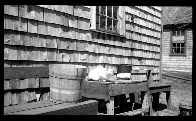 Lyman Cushman's cat, 1925
